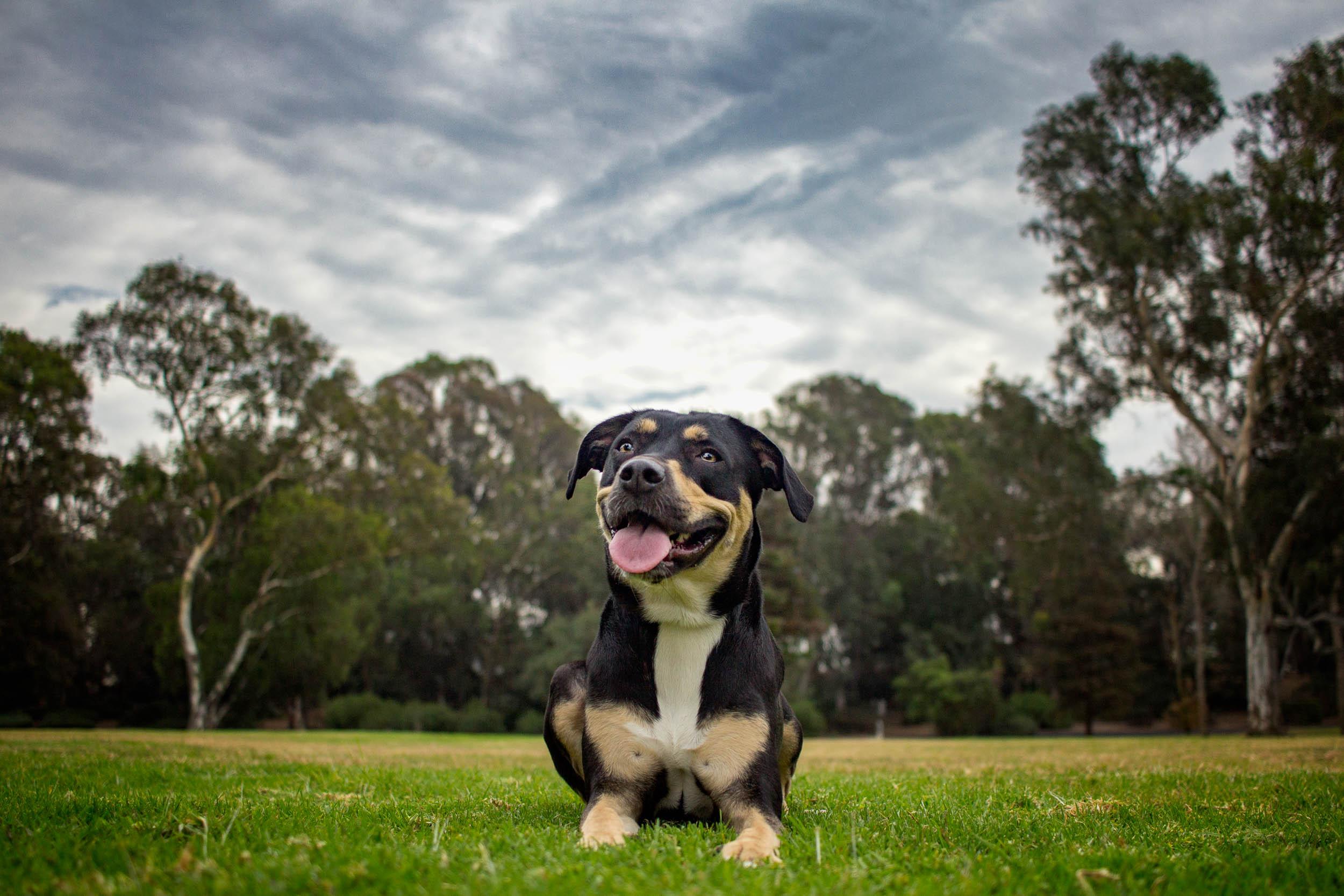11-Orange-County-Dog-Photographer-Southern-California-Steamer-Lee.JPG