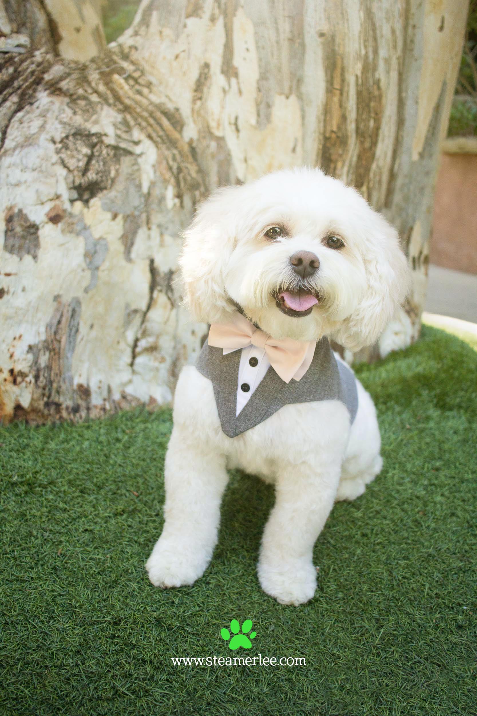 10-Orange-County-Dog-Photographer-Southern-California-Steamer-Lee.JPG