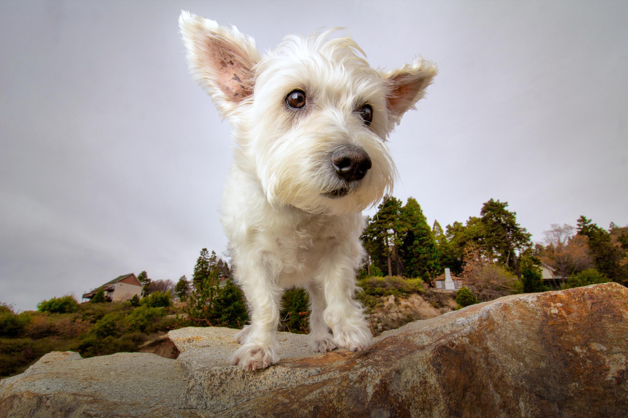 22-Orange-County-Dog-Photographer-Southern-California-Steamer-Lee.JPG