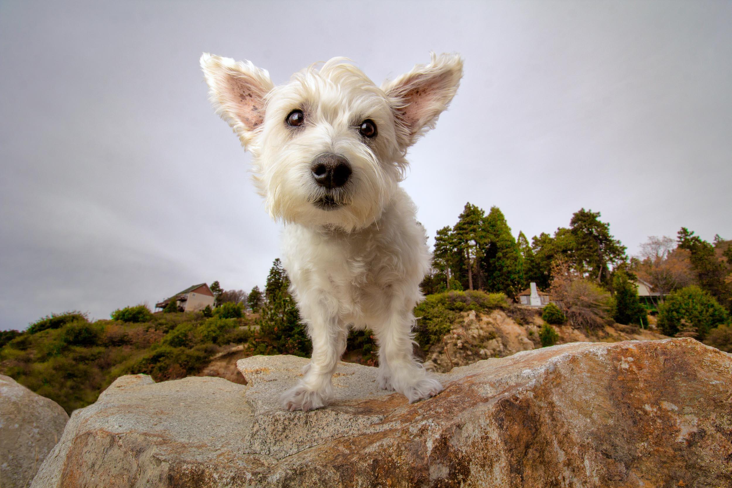 21-Orange-County-Dog-Photographer-Southern-California-Steamer-Lee.JPG