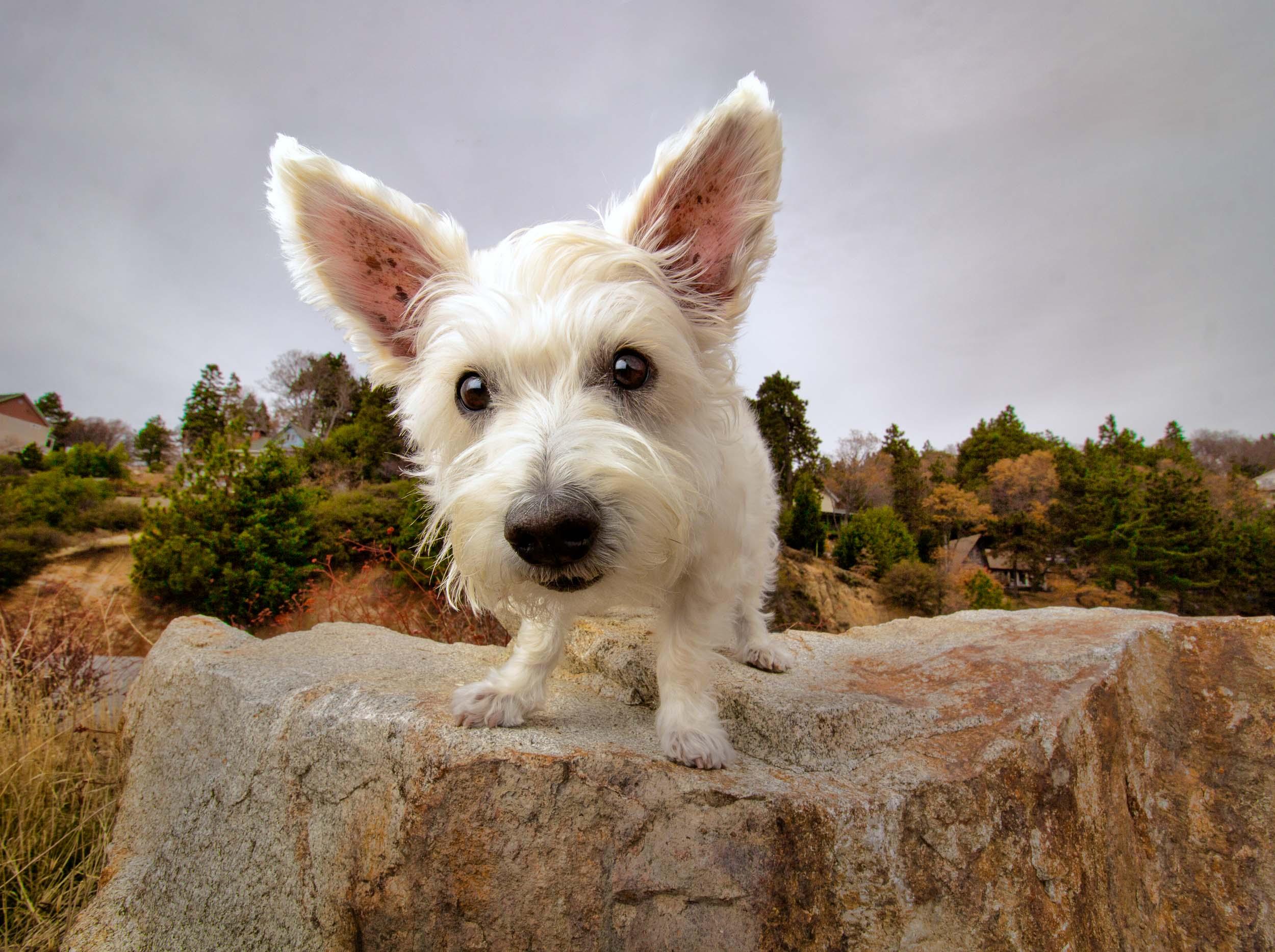 24-Orange-County-Dog-Photographer-Southern-California-Steamer-Lee.JPG