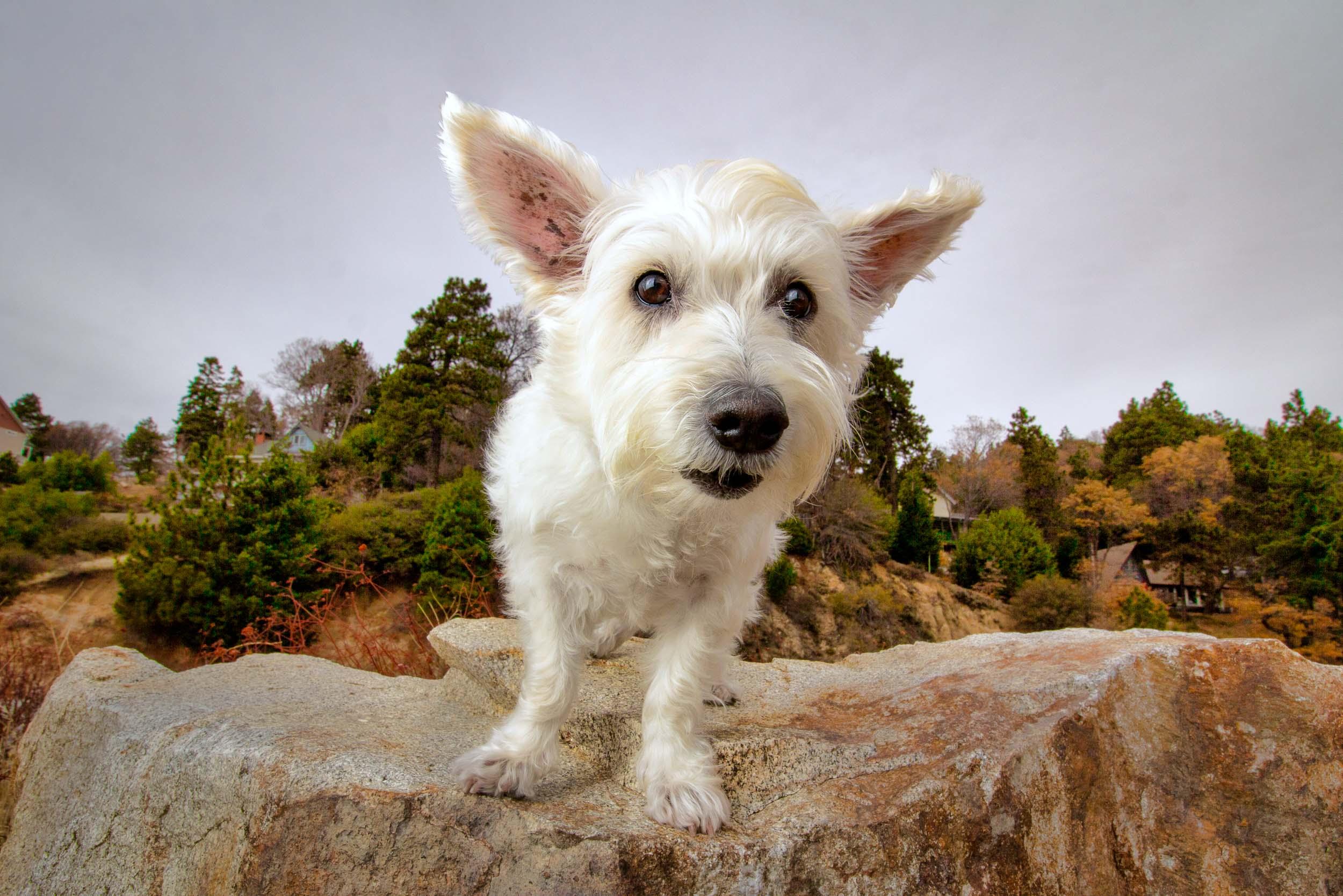 23-Orange-County-Dog-Photographer-Southern-California-Steamer-Lee.JPG
