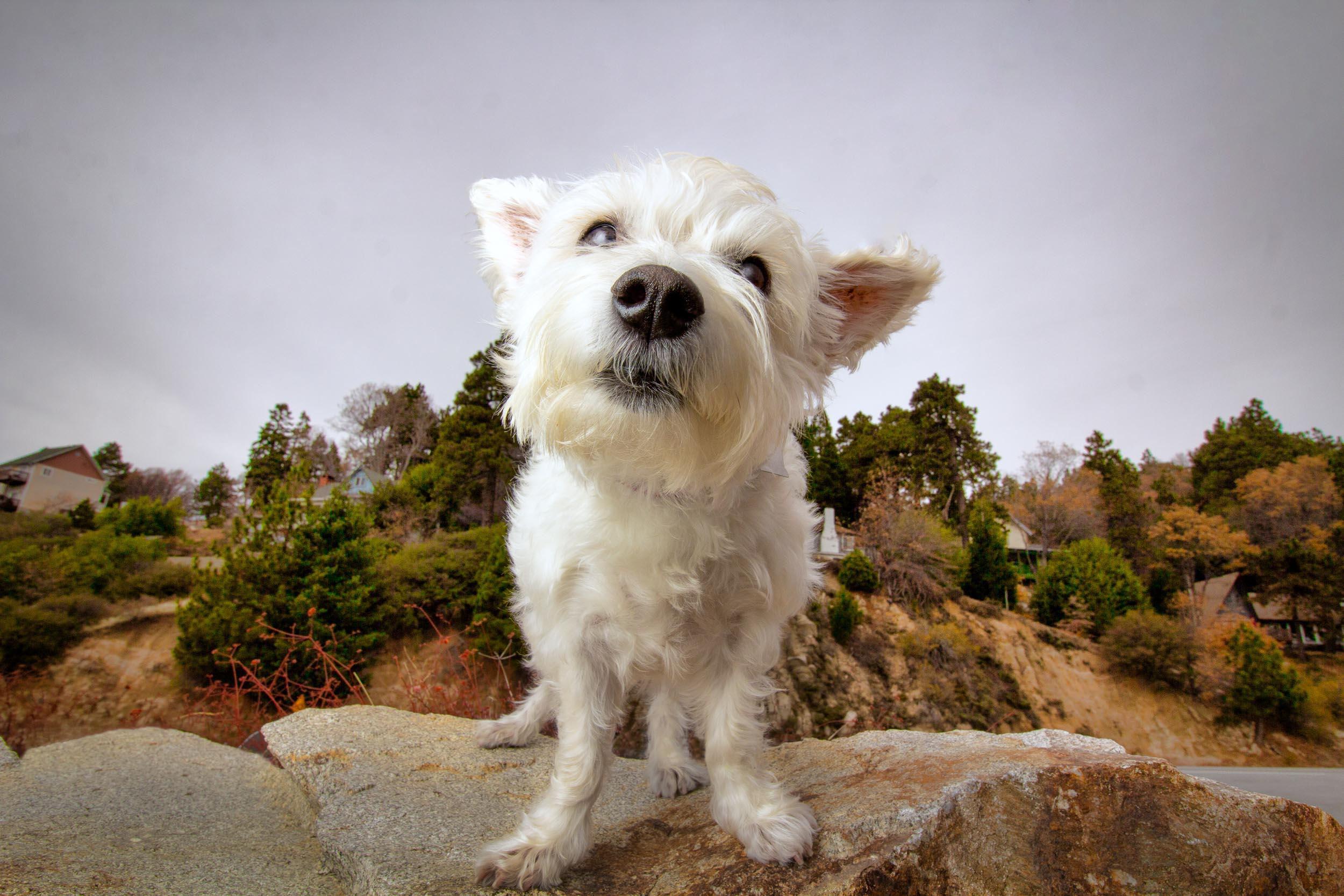 27-Orange-County-Dog-Photographer-Southern-California-Steamer-Lee.JPG
