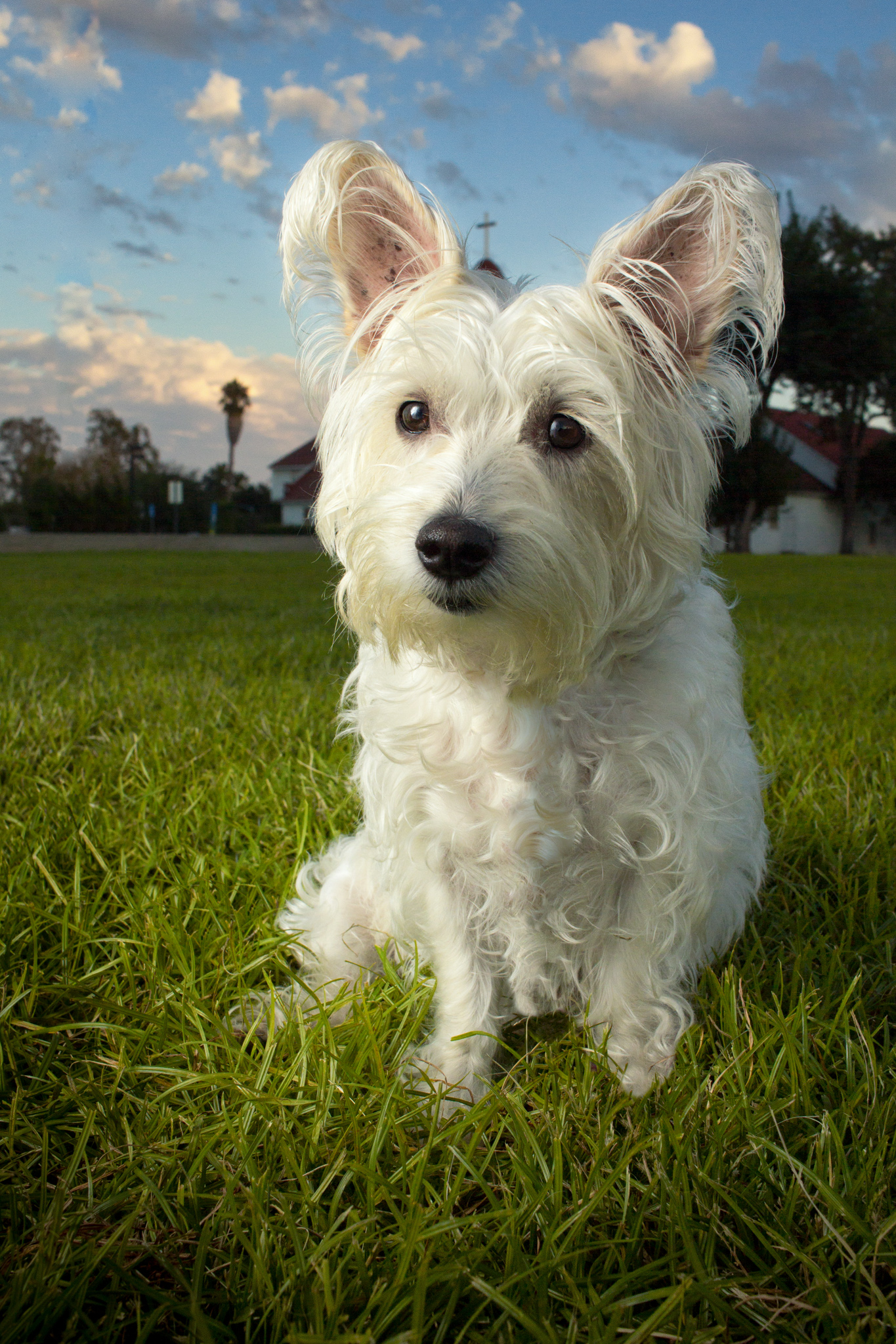 37-Orange-County-Dog-Photographer-Southern-California-Steamer-Lee.JPG