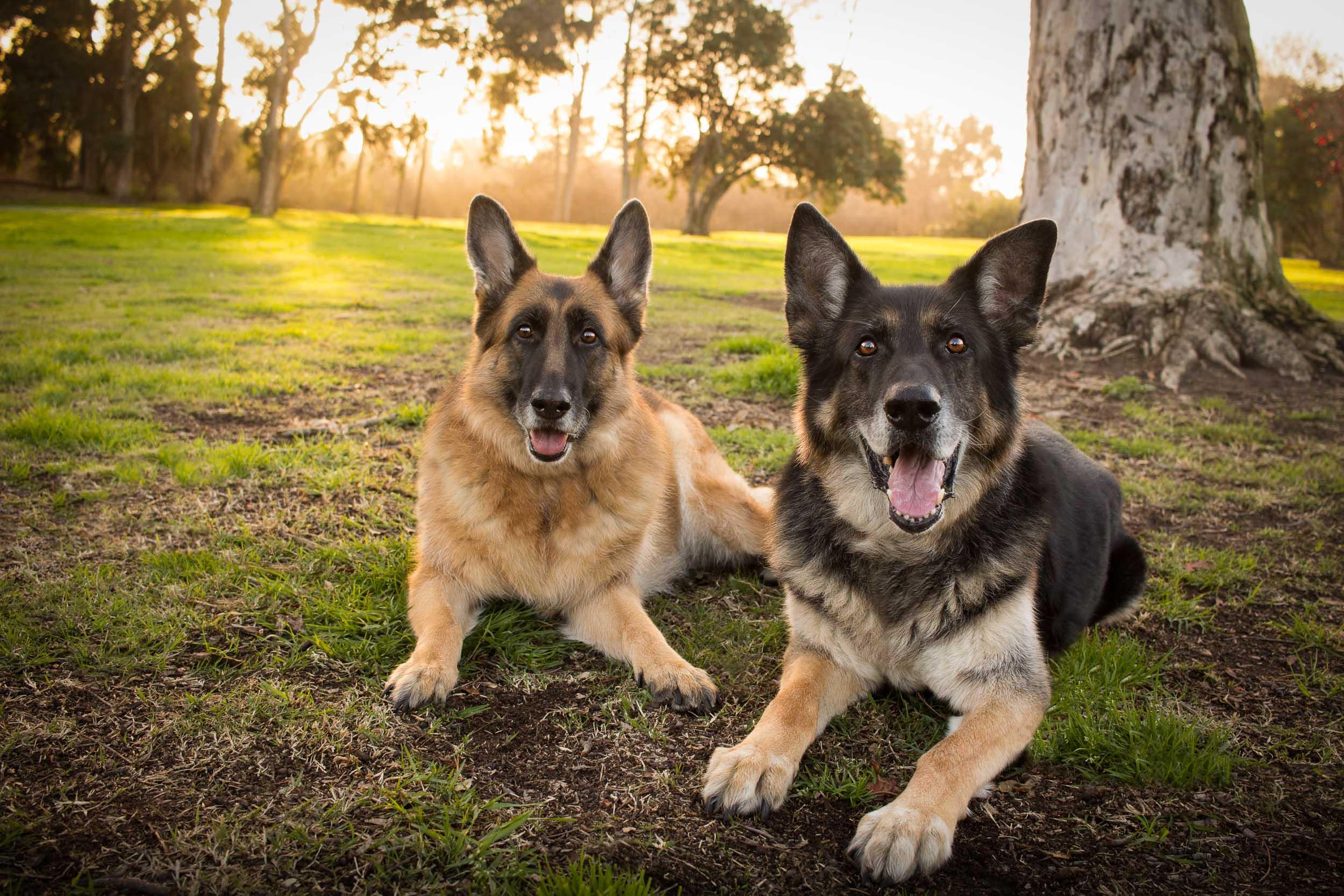 06-Orange-County-Dog-Photographer-Southern-California-Steamer-Lee.JPG