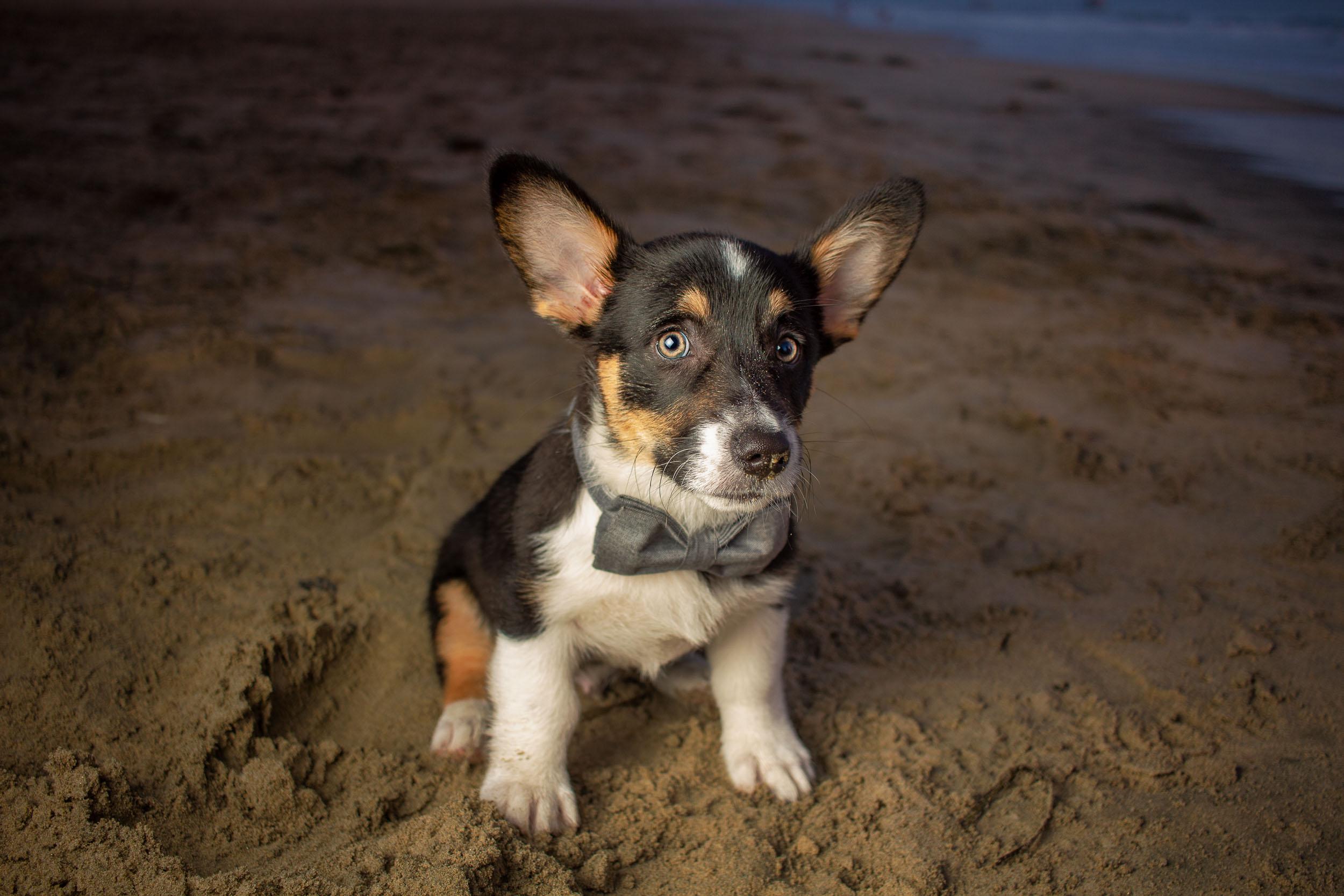 46-Orange-County-Dog-Photographer-Southern-California-Steamer-Lee.JPG