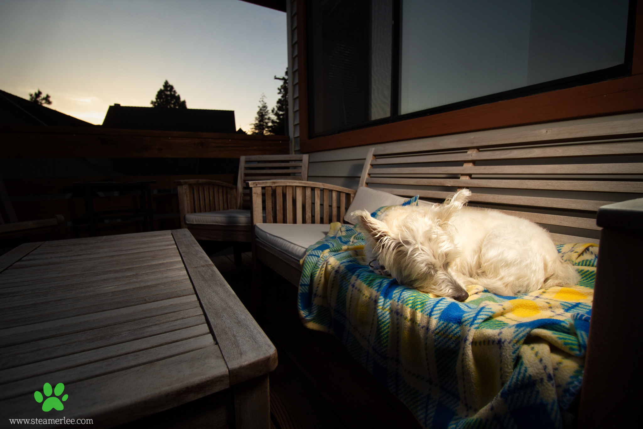 Steamer-Lee-Dog-Photography-Quiet-Summer-Sunset.jpg