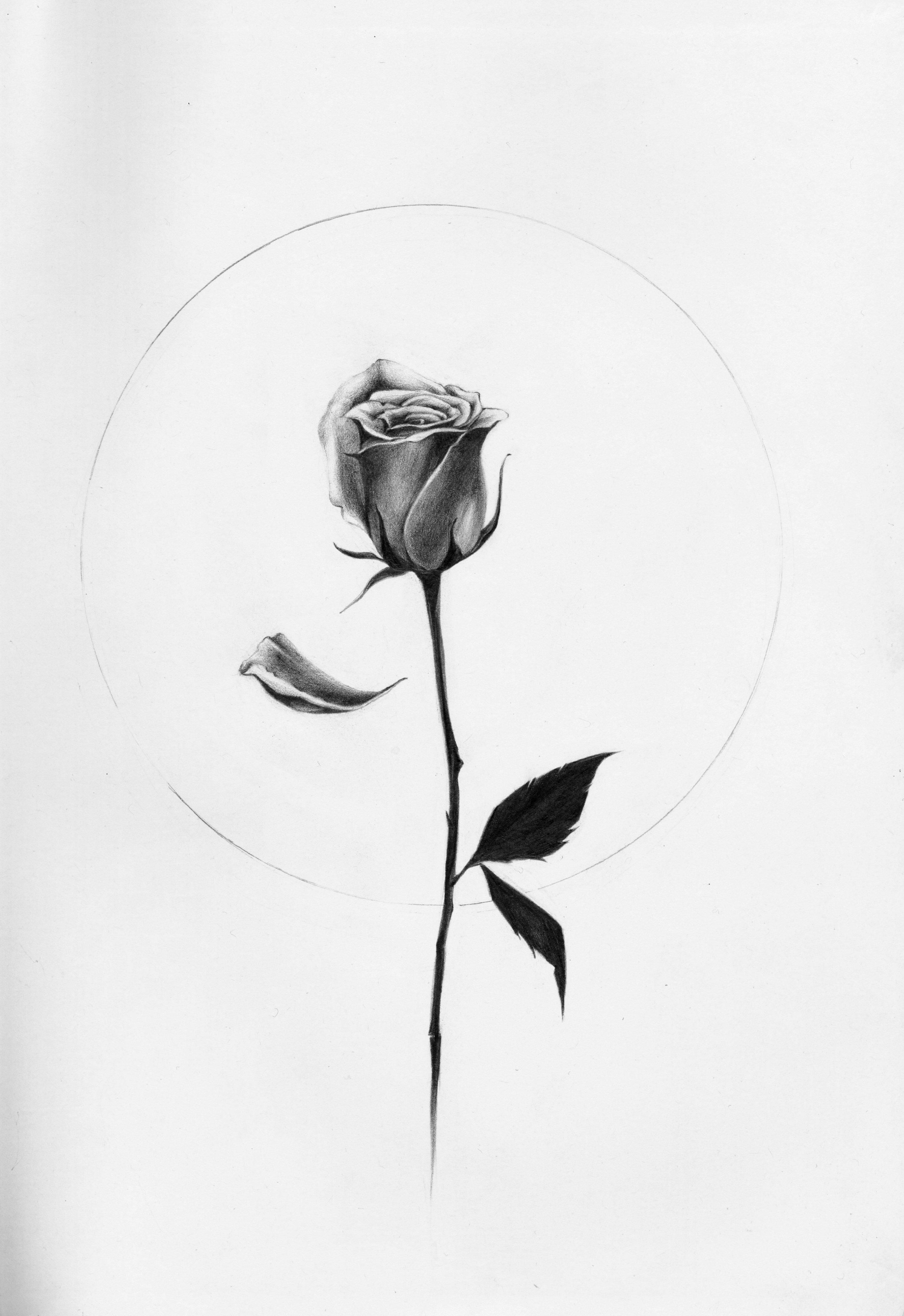 Rose-Doodle