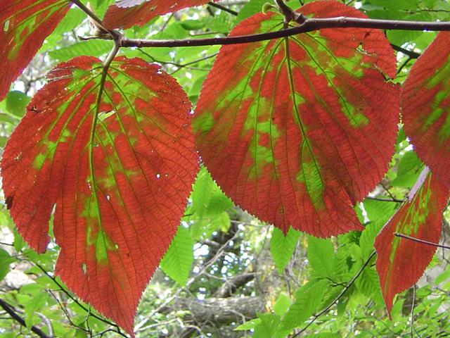 turning_leaves.jpg