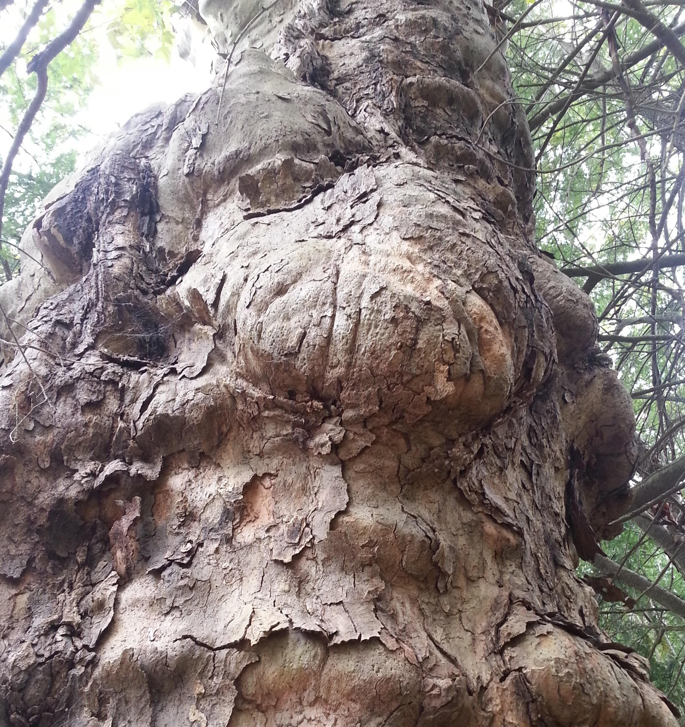 Princeton tree.jpg