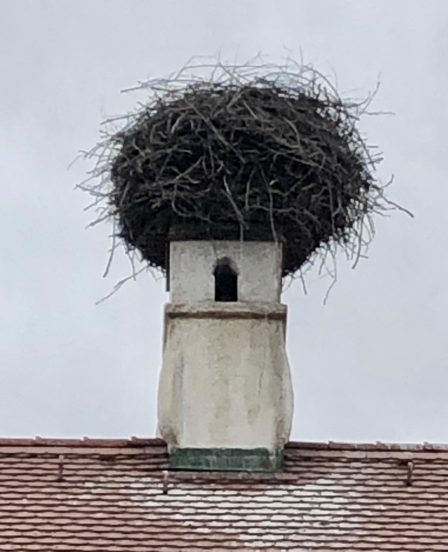 stork nest by studiobeerhorst
