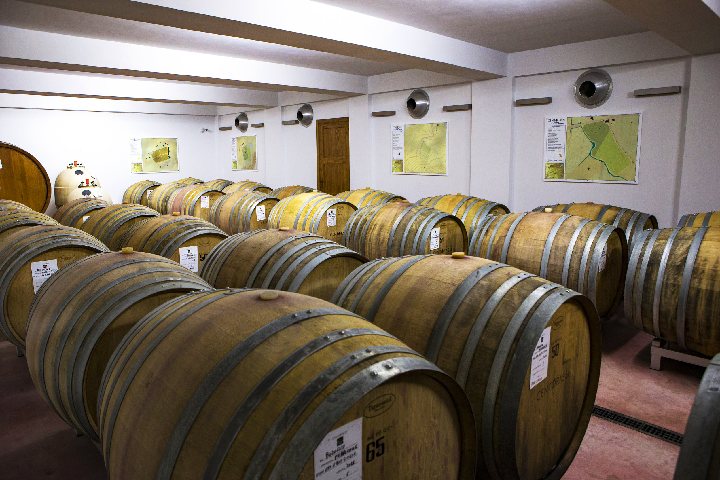 WINERY 1 Ph © Giorgio_Salvatori.JPG