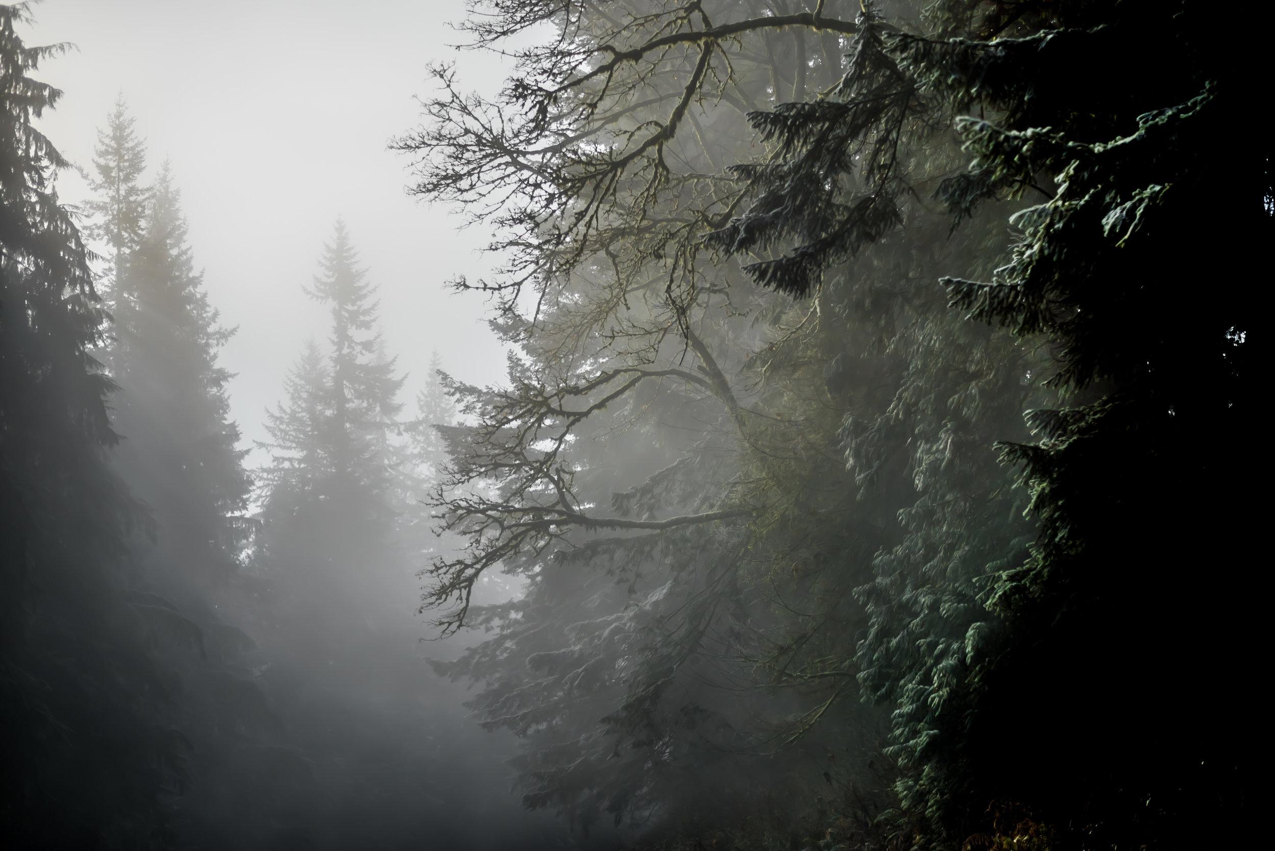 Gradient Pines