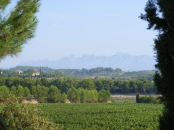 paisatge-vitivinicola-penedes.jpg