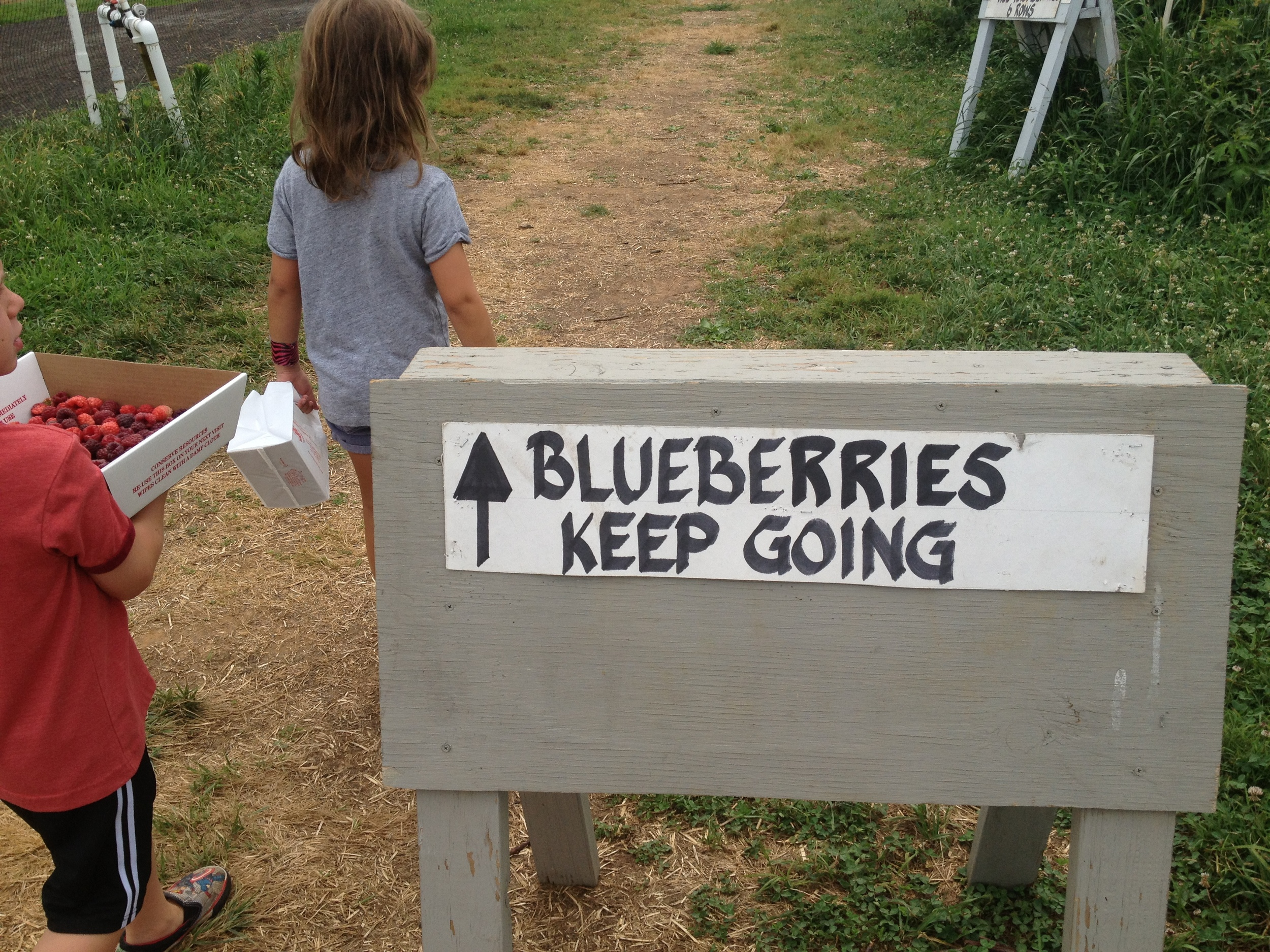 Blueberries are next