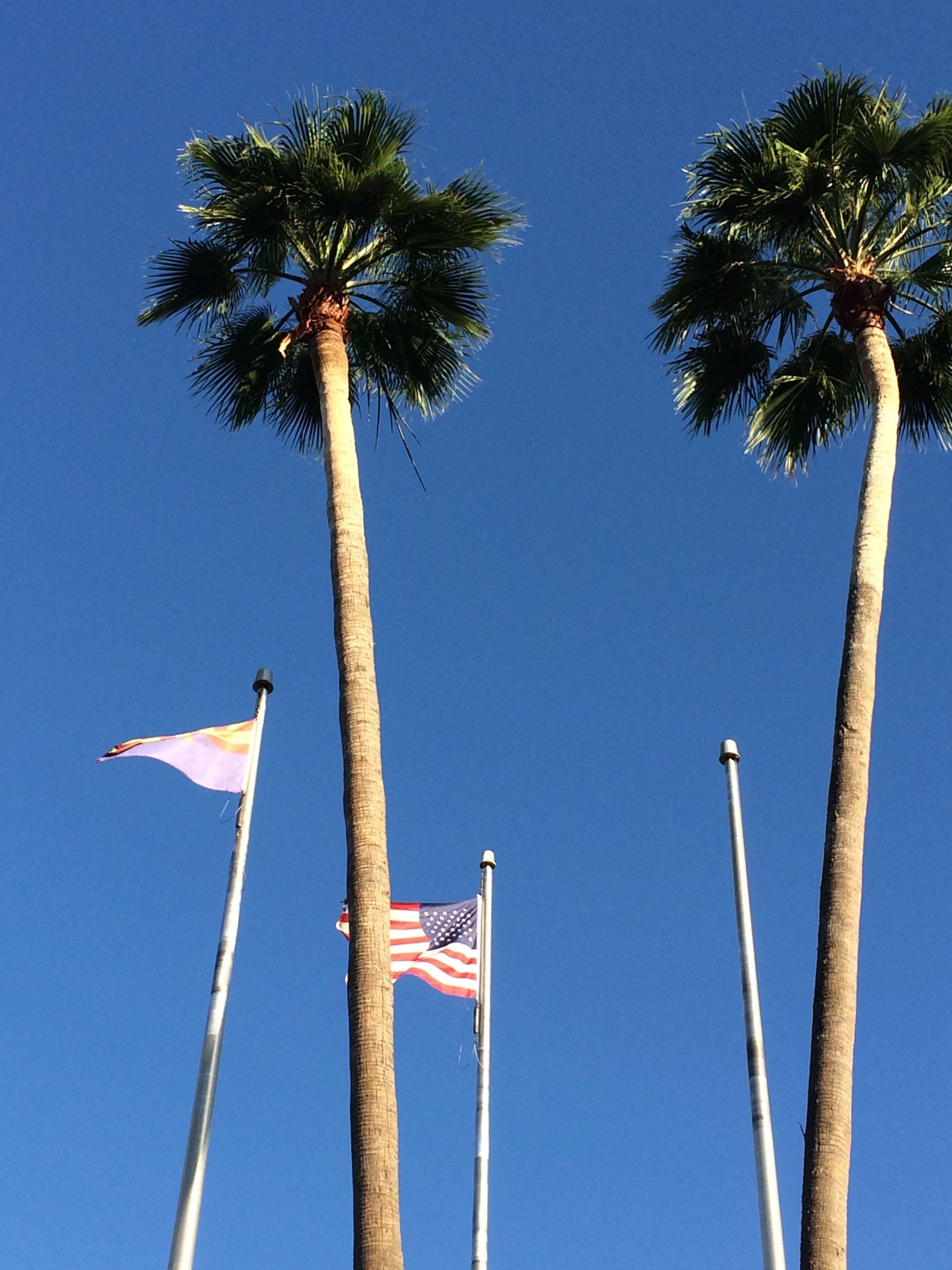 Trees_Flag.jpg