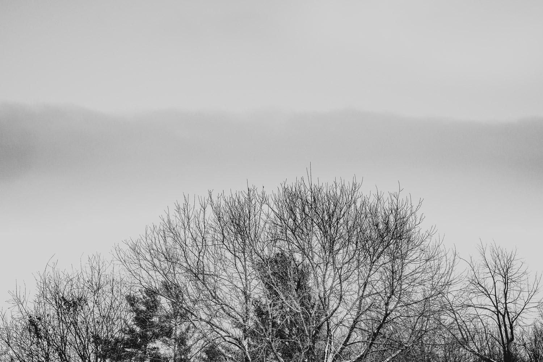 Trees. Cloud.