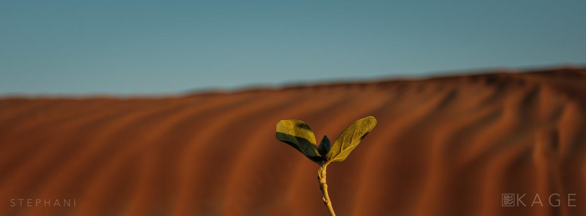 STEPHANI-desert-18.jpg