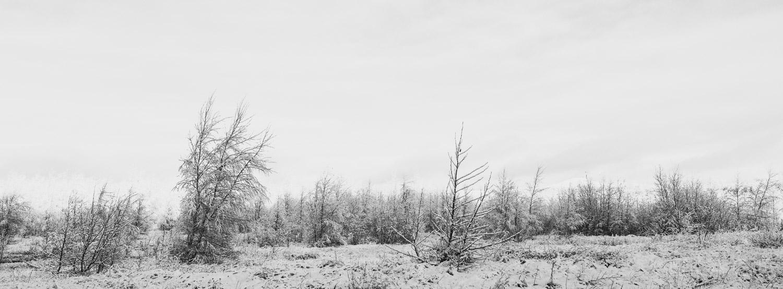 012_CLARK_65x24-Winter.jpg