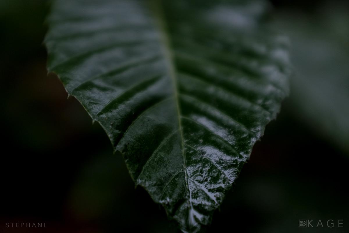 STEPHANI-woods-01.jpg