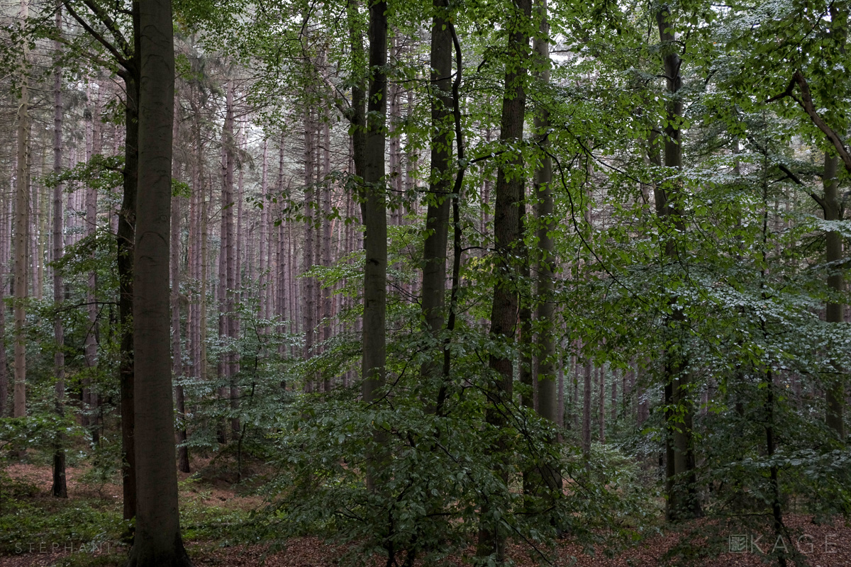 STEPHANI-woods-02.jpg