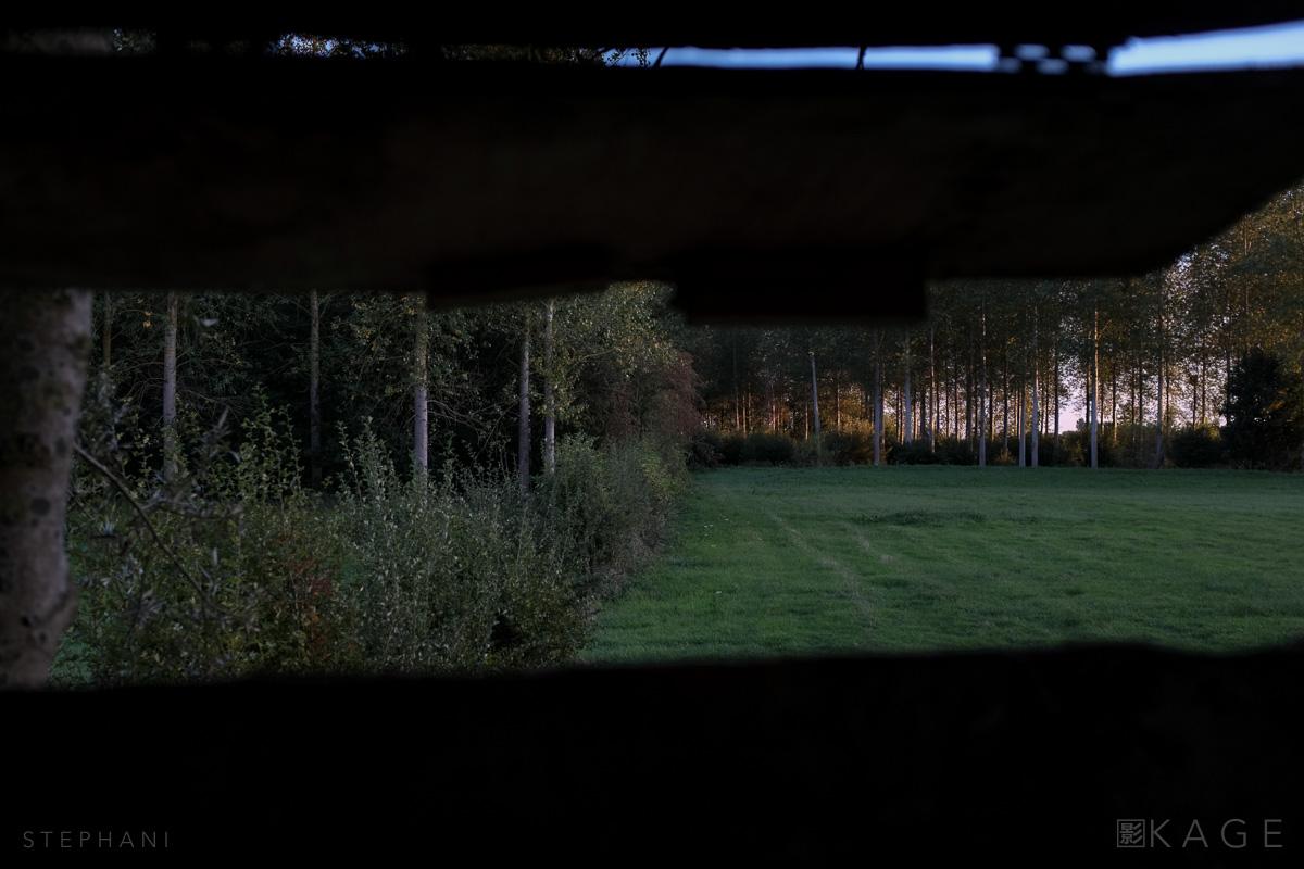 STEPHANI-woods-06.jpg