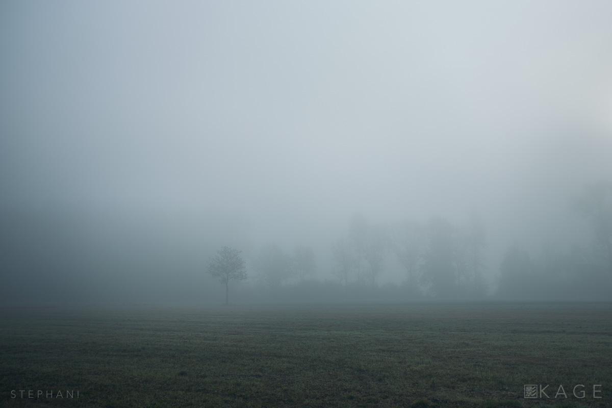 STEPHANI-hunt-chronicle-04.jpg