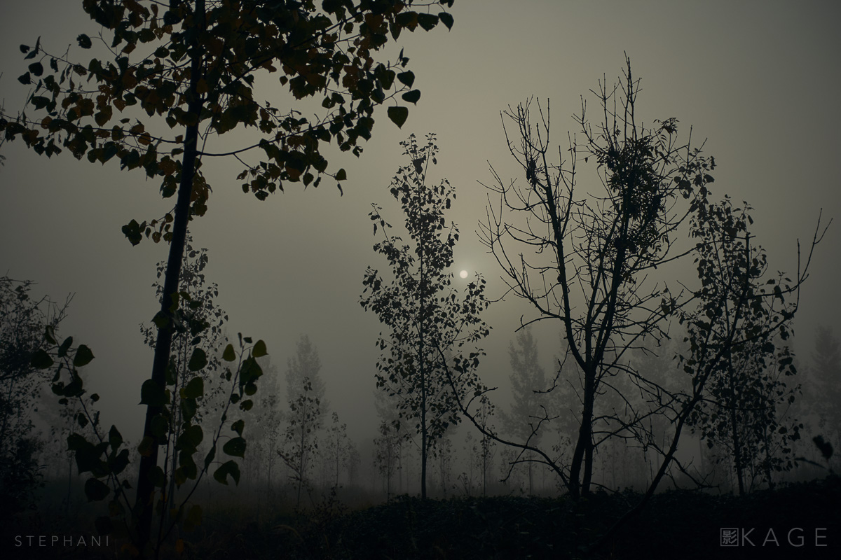 STEPHANI-hunt-chronicle-06.jpg