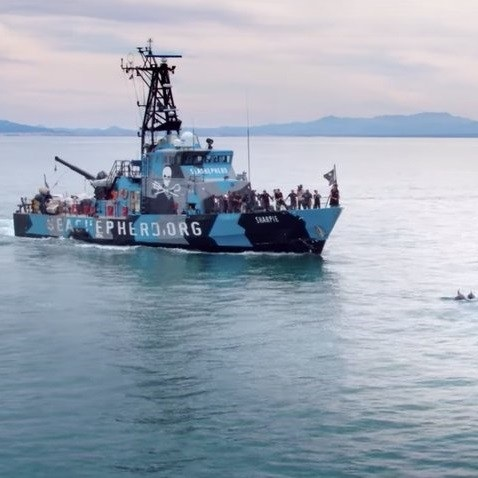 Mar-de-Sombras-Sea-of-Shadows-This-Documentary-Produced-by-Leonardo-DiCaprio-is-a-Call-to-Save-the-Vaquita-Navy-in-Mexico.jpg