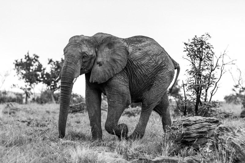 Bastille South Africa Safari-091.jpg