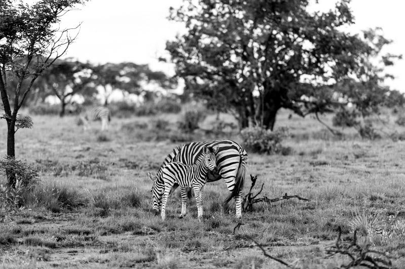 Bastille South Africa Safari-335.jpg
