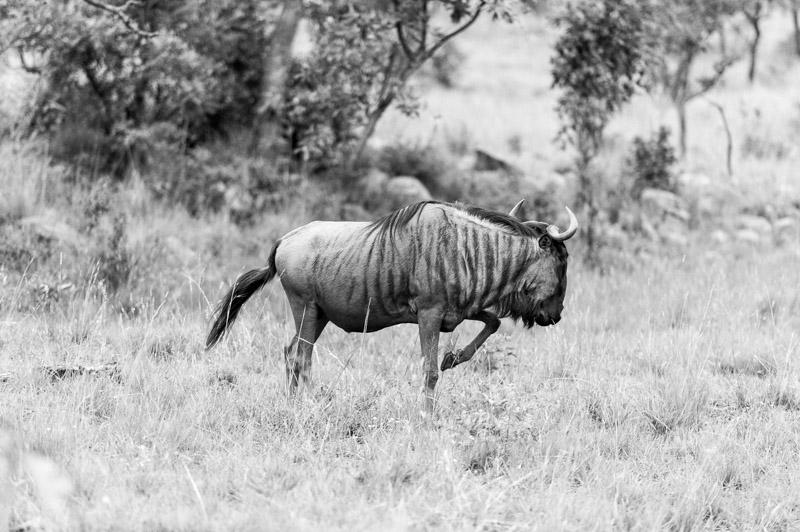 Bastille South Africa Safari-172.jpg