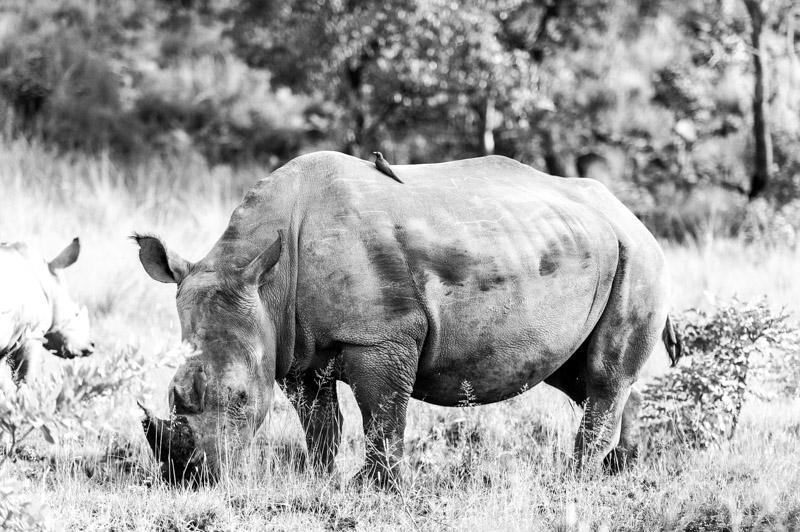Bastille South Africa Safari-370.jpg