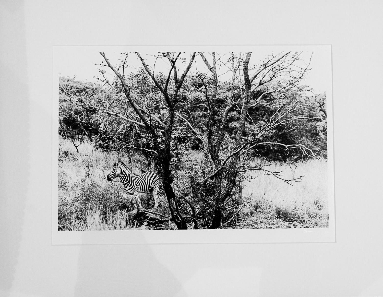 My Prints -050.jpg