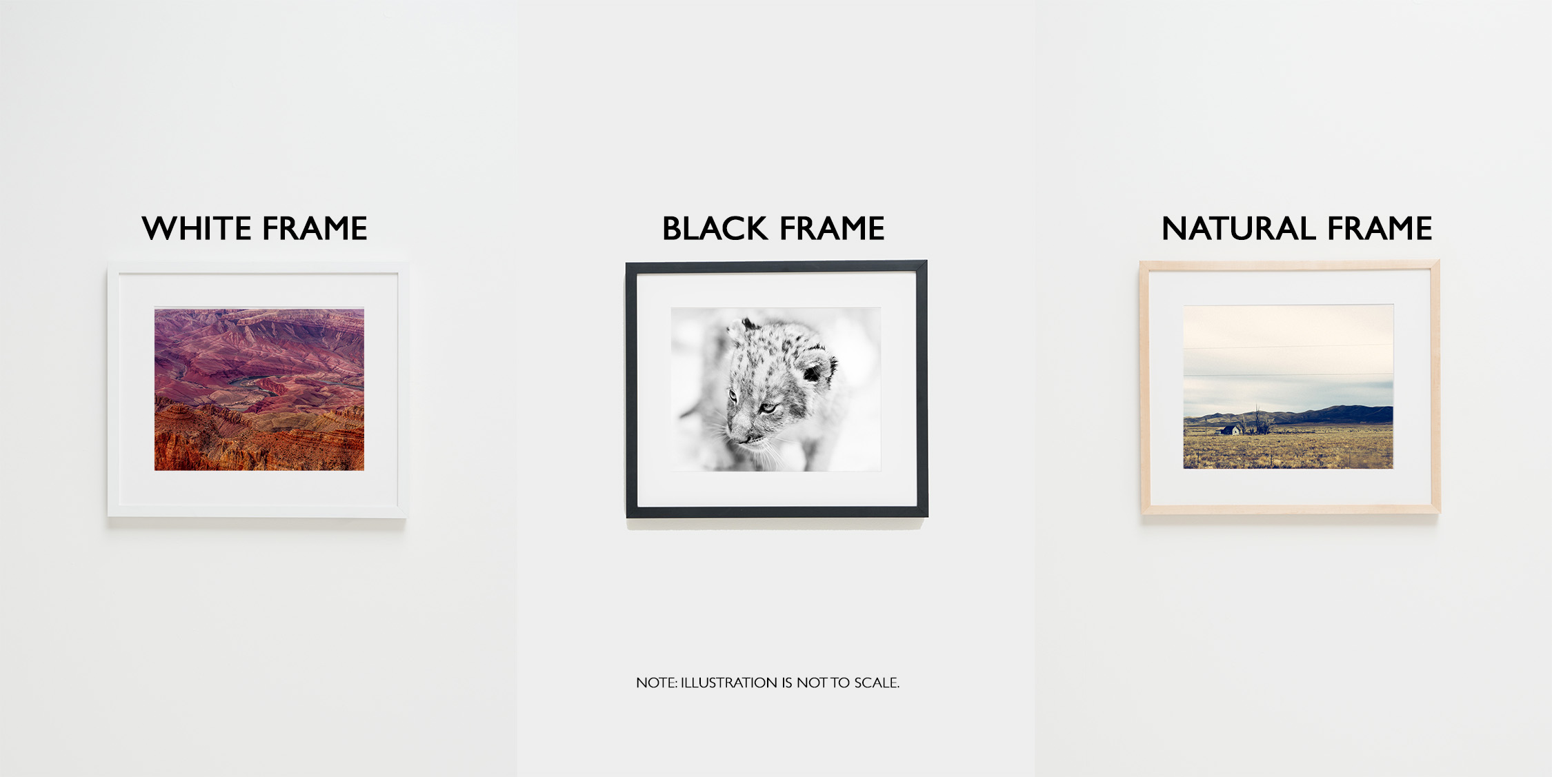 Gregory Nolan Framed Prints
