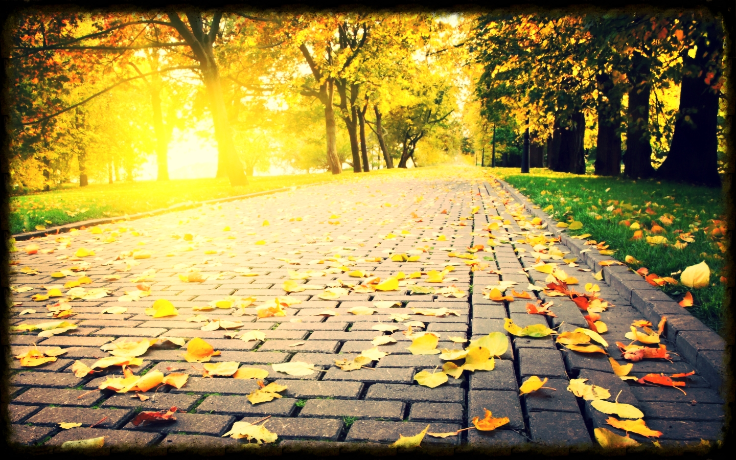 landscapes_trees_autumn_leaves_grass_path_scenic_fallen_leaves_3744x2600_wallpaper_Wallpaper_1440x900_www.wallpaperswa.com.jpg