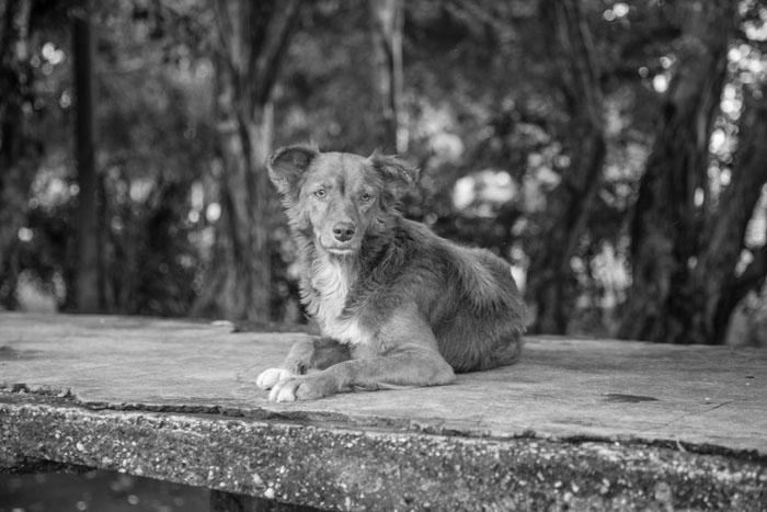 dogs-21.jpg
