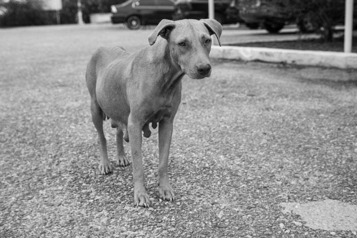 dogs-19.jpg