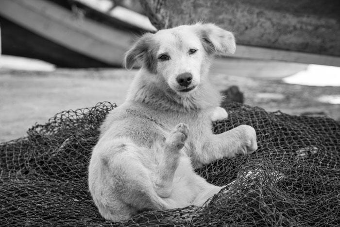 dogs-22.jpg