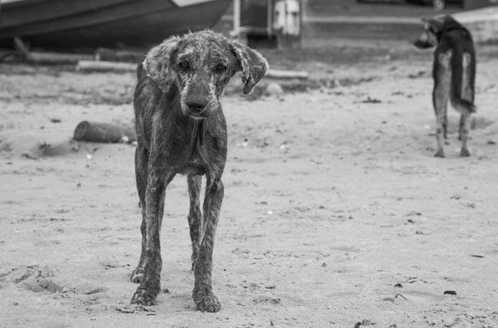 dogs-24.jpg