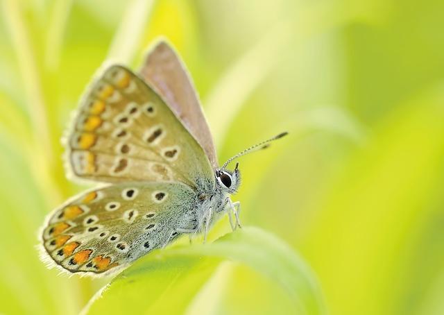 butterflies-95358_640