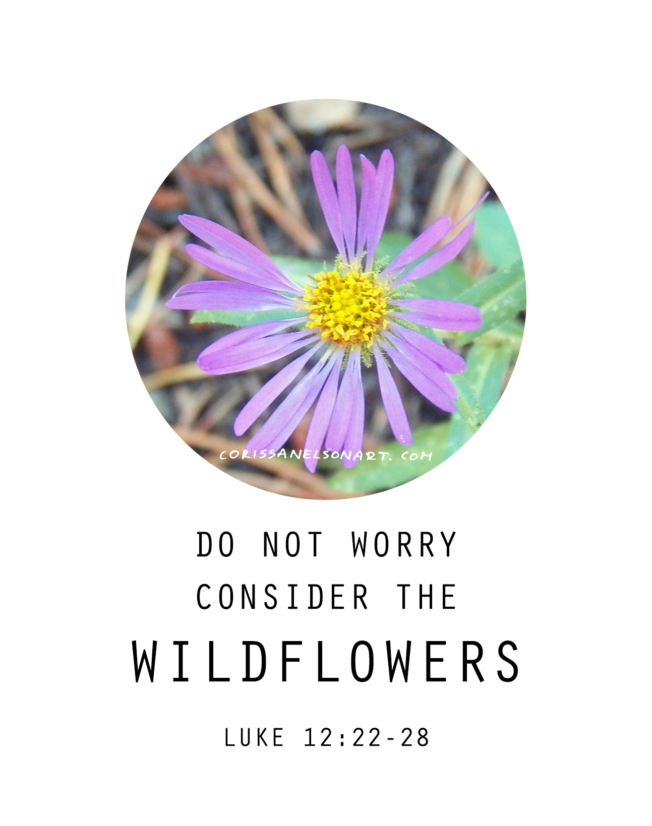 Do Not Worry - In the mountains, flowers grow in the craziest spots.  They might be right in a pathway, or in between rocks.  Their situations might not be what you would consider ideal, and yet they bloom.
