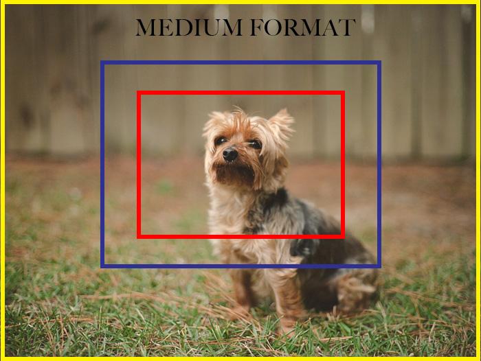 Medium Format