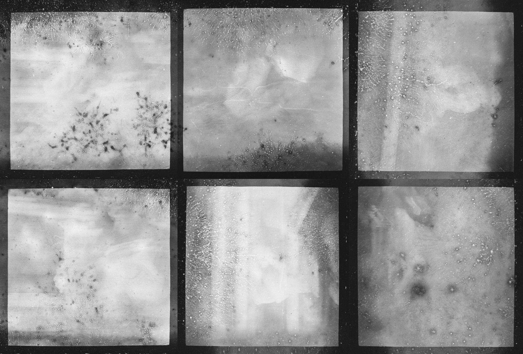 Developed Film Found in a Box Camera