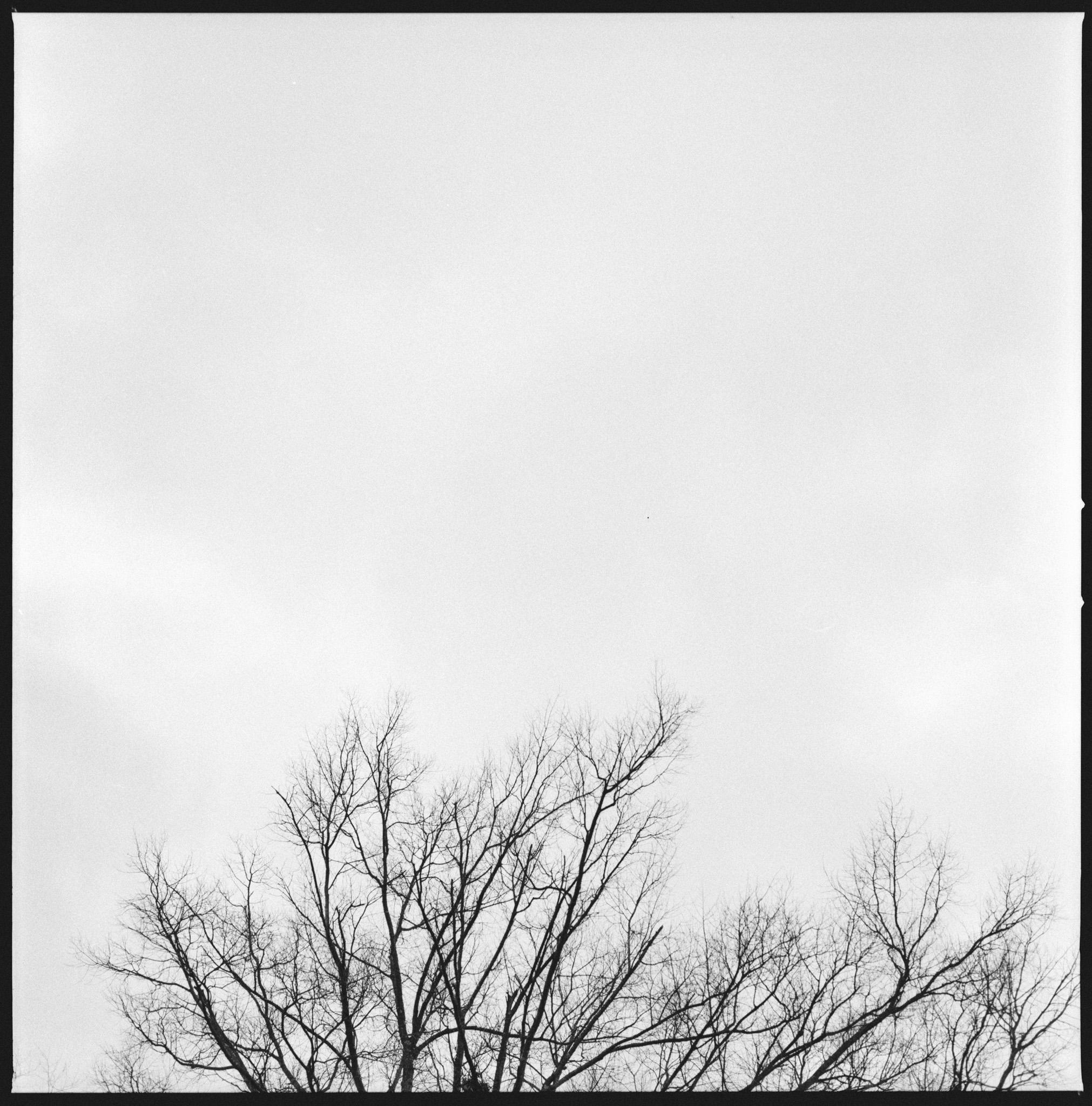 Photographer: Darkroom Portraits  Camera and Film: Hasselblad 501CM and Hp5+  © 2016 Darkroom Portraits