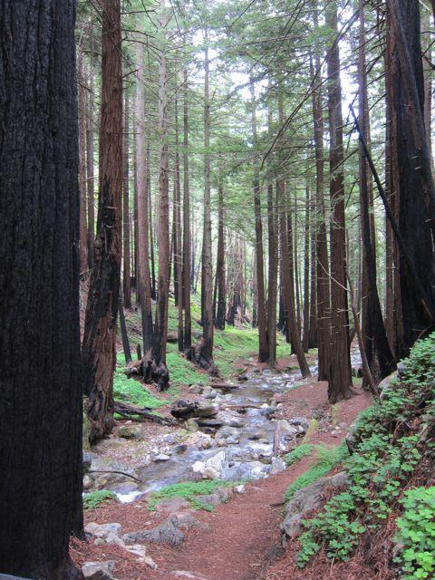Trees & River.jpg