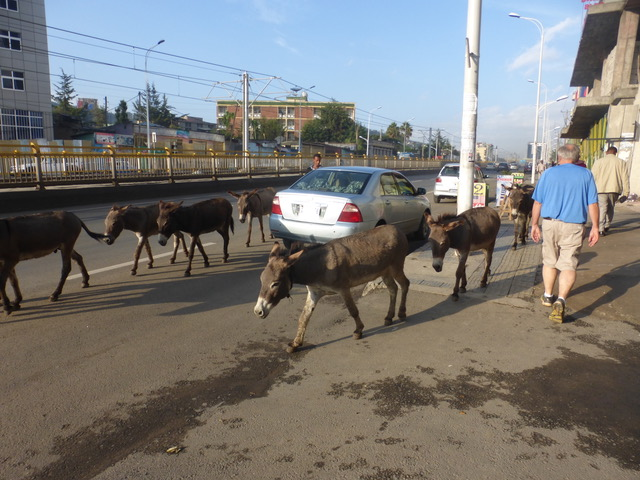 On our walk Saturday afternoon: fewer cars, fewer people, more donkeys.:)