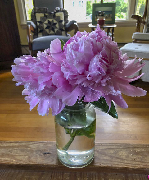 Is there anything sweeter than peonies??
