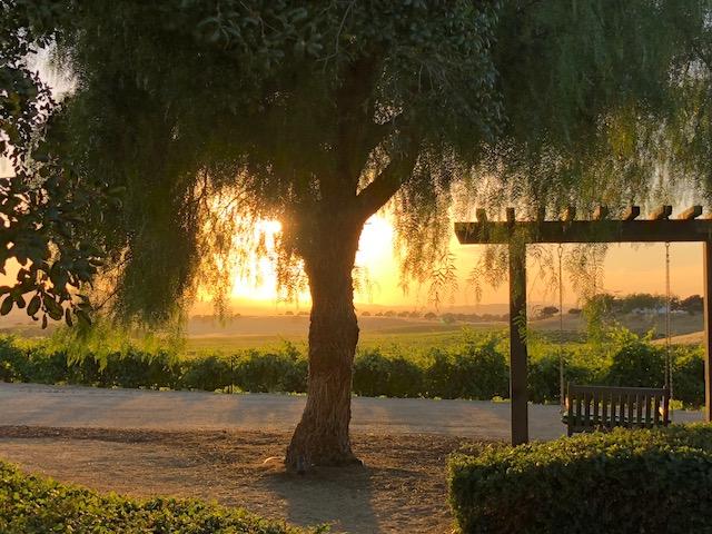 Sunset in the vineyard was breathtaking.