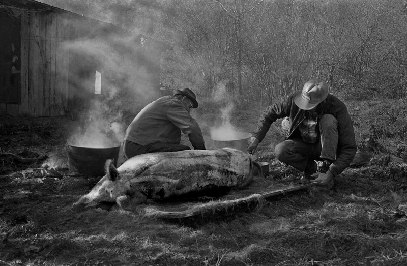 Mac Davis and a Friend Butchering a Hog in Mac's Side Yard